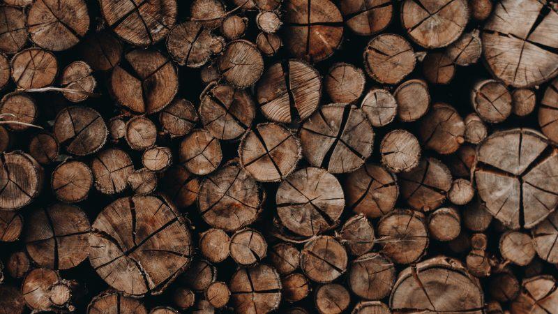 Sideboards im Überblick: Um welche Art von Holz handelt es sich?